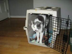 Jinx the cat on arrival